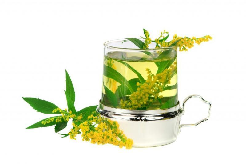 Tea From Goldenrod (solidago Gigantea)