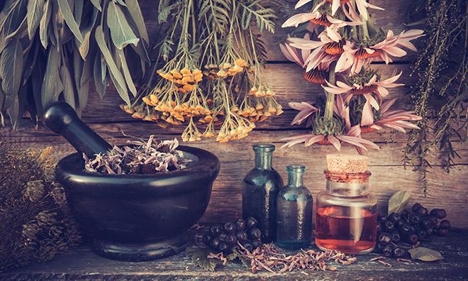 Kasvirág – echinacea