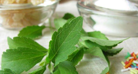 betiltott stevia